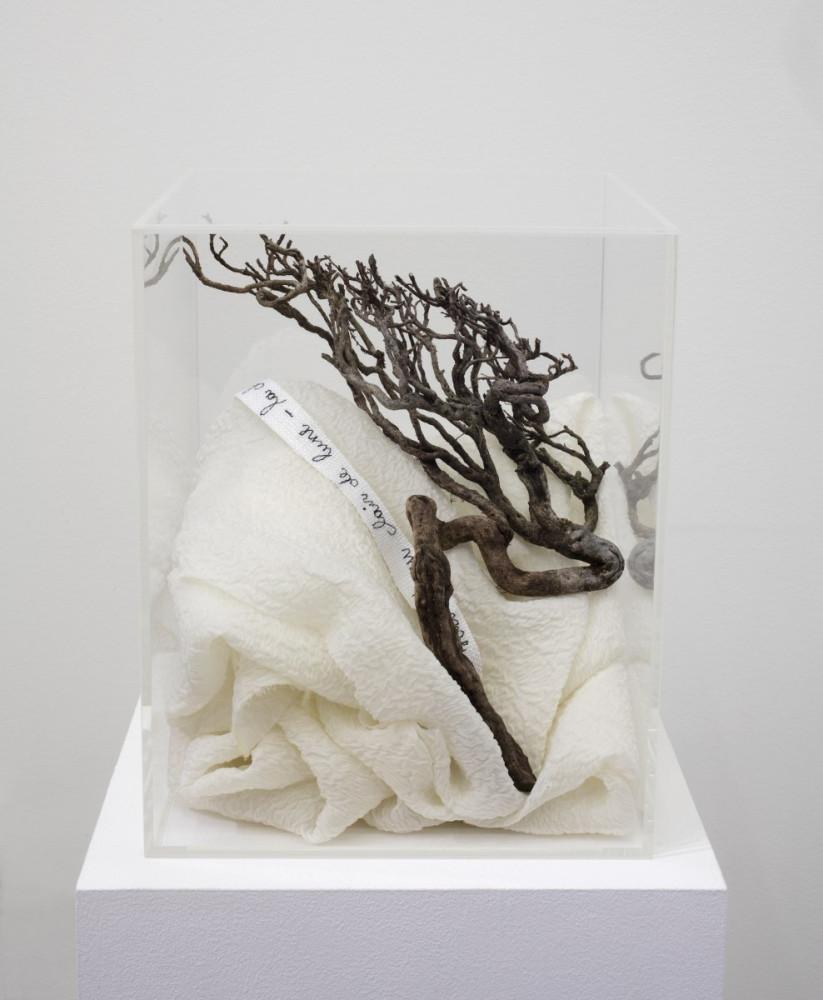 Véronique Arnold, 'Chute de camélias blanc ', 2018