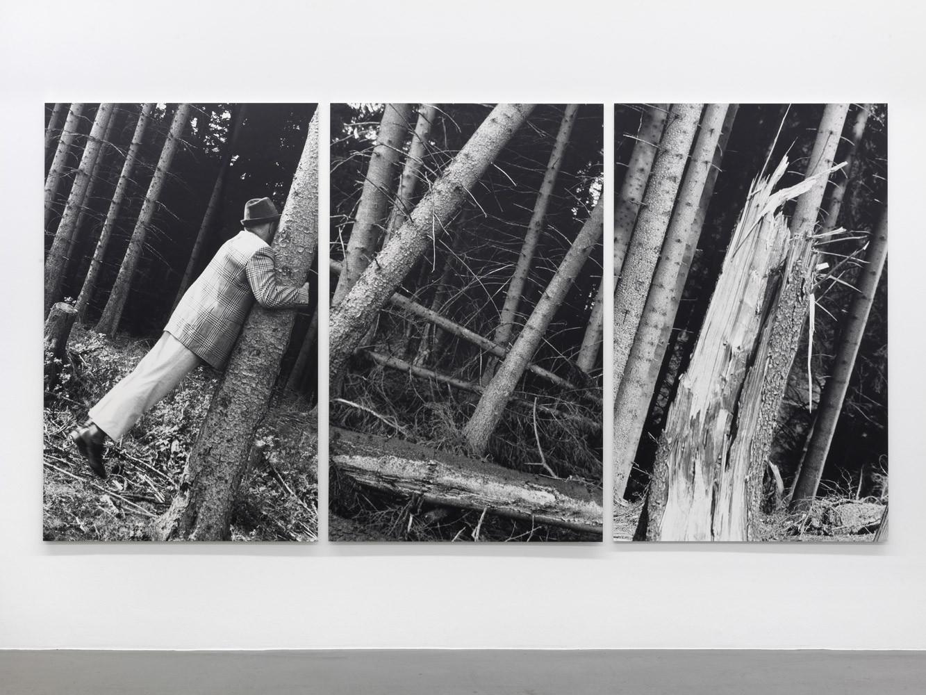 Anna & Bernhard Blume, 'Kontakt mit Bäumen', 1987